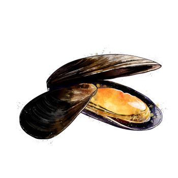 Mussels, isolated raster illustration in watercolor style on a white background.