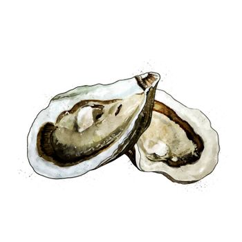 Oyster, isolated raster illustration in watercolor style on a white background.