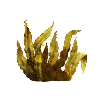 Sea Kelp, isolated raster illustration in watercolor style on a white background.
