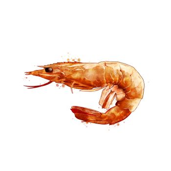 Pink Shrimp, isolated raster illustration in watercolor style on a white background.
