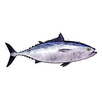 Tuna, isolated raster illustration in watercolor style on a white background.