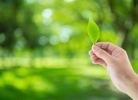 Hand with leaves on nature background - environment conservation