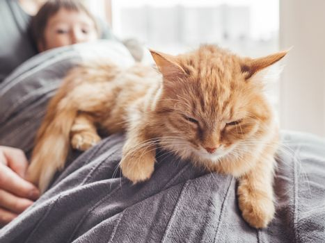 Father, son and they's cute ginger cat sit on window sill. Family relax under blanket. Man, toddler boy and fluffy pet at cozy home.