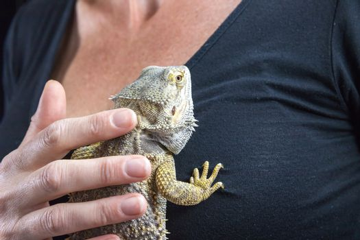 The woman is stroking Agama lizard on her chest