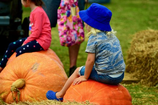 Farmers market, giant pumpkins on display. A cute little child sitting on a pumpkin.