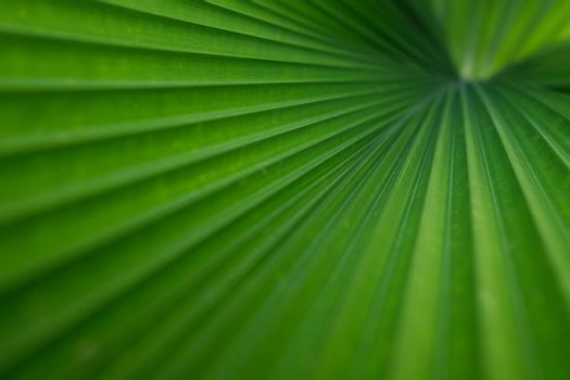 Beautiful green foliage texture with leaves pattern used as a background image. The concept of abstract plants and selected focus.