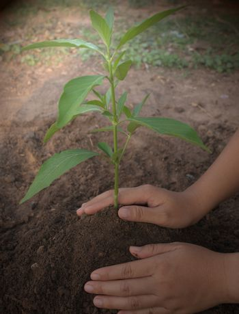 Two hands that support the newly planted seedlings Wonderful image for global warming, hope, sustainability, green world, and agriculture.