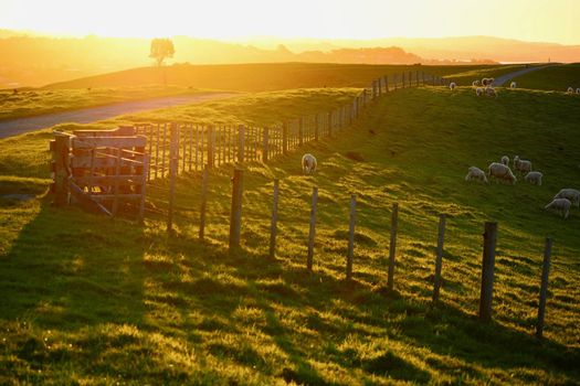 farming and rural property in New Zealand; light fence; boundaries of private property