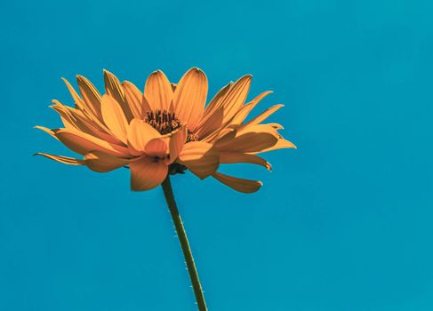 yellow summer flower on a background of blue sky