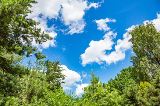 Picturesque textured clouds in the sky and branches of green trees at the daytime