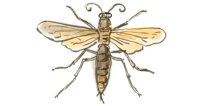 Wasp Drawing Time Lapse 2D Animation