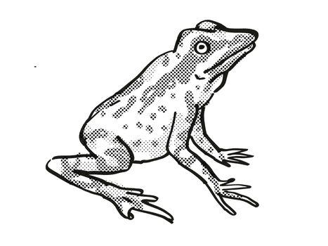 Andersson's Stubfoot Toad Endangered Wildlife Cartoon Drawing