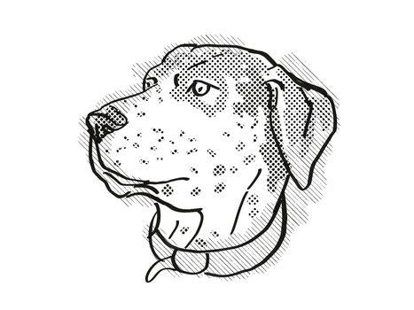 Catahoula Leopoard Dog Breed Cartoon Retro Drawing