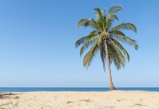 Coconut palms on the beach with blue sky.
