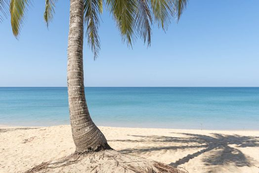 Coconut palms and shade on the beach.
