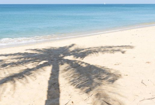 Shadow of the coconut palm trees on the beach.