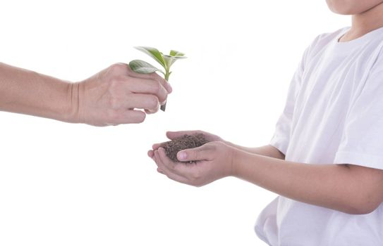 Woman delivers a tree with a boy on a white background.