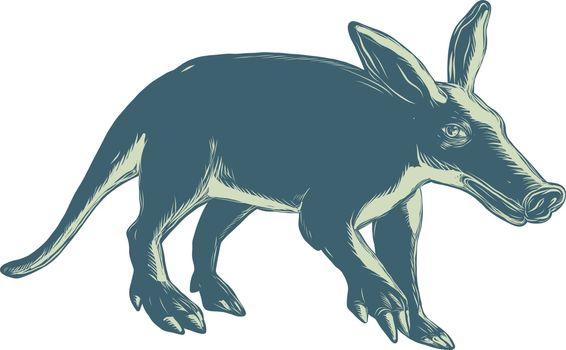 Aardvark Scratchboard Style
