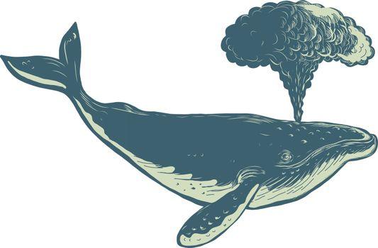 Humpback Whale Blowing Water Scratchboard