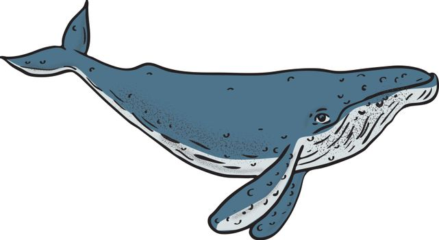 Humpback Whale Color Drawing
