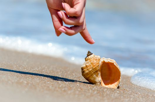female hand finger points to seashell in surf on beach in Egypt