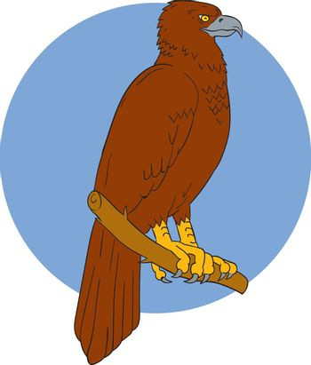 Drawing sketch style illustration of an Australian wedge-tailed eagle or bunjil Aquila audax, sometimes known as the eaglehawk, the largest bird of prey in Australia perced on a branch viewed from the side set inside circle.