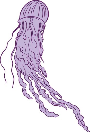 Drawing sketch style illustration of an Australian Box jellyfish (class Cubozoa) or jellies, cnidarian invertebrates distinguished by their cube-shaped medusae, are softbodied, free-swimming aquatic animals with a gelatinous umbrella-shaped bell and trailing tentacles set on isolated white background.