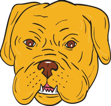 Illustration of a Dogue de Bordeaux, Bordeaux Mastiff, French Mastiff or Bordeaux dog, a large French Mastiff breed one of the most ancient French dog breeds head viewed from front set on isolated white background done in cartoon style.