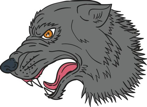 Drawing sketch style illustration of grey wolf head growling viewed from the side set on isolated white background.