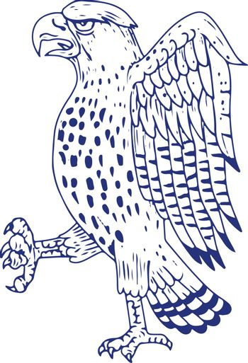 Drawing sketch style illustration of a Sharp-shinned Hawk, a medium-sized diurnal bird of prey of family Accipitridae marching side view on isolated background.