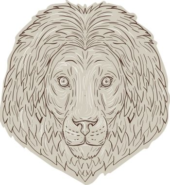 Drawing sketch style illustration of a lion big cat head with flowing mane viewed from front set on isolated white background.