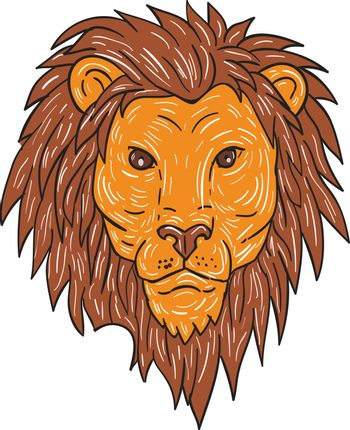 Drawing sketch style illustration of a male lion big cat head with flowing mane viewed from front set on isolated white background.