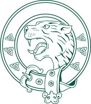 Illustration of a Scottish Wildcat or Highlands tiger Head viewed from side set inside Celtic Belt done in hand drawn sketch drawing.
