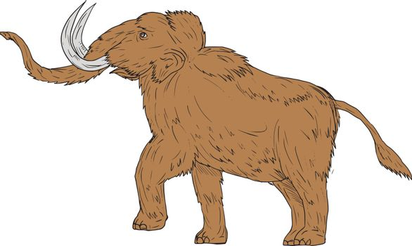 Drawing sketch style illustration of a woolly mammoth, Mammuthus primigenius, a prehistoric elephant that lived during the Pleistocene epoch and one of the last mammoth species prancing viewed from the side set on isolated white background.