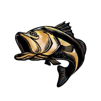 Largemouth Bass Scratchboard