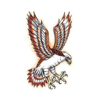 Tattoo style illustration of Osprey, Pandion haliaetus also called sea hawk, river hawk, fish hawk swooping viewed from side.