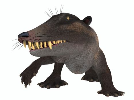 Ambulocetus was the primitive otter-like ancestor of the whale and lived in Pakistan and India during the Eocene Period.