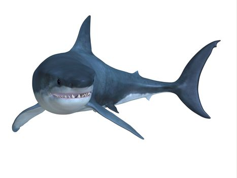 The Great White shark can be found in worldwide oceans and can live up to 70 years.