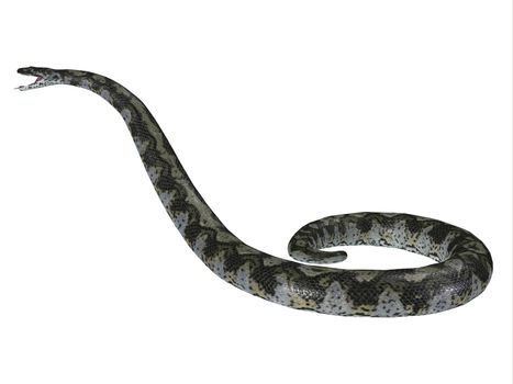This predatory carnivorous Titanoboa snake lived during the Paleocene Period of Columbia, South America.