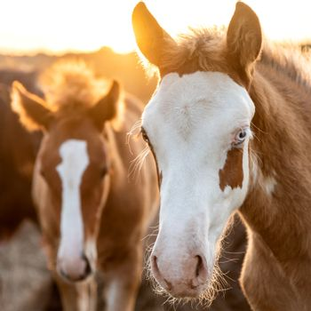 A young man in a pen with his mother mare walks