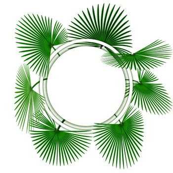 Green tropical palm leaves. In the circle. Advertising space. Vector illustration