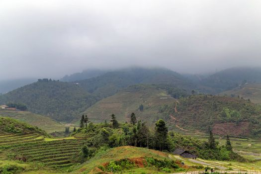 Rice field terraces. Mountain view in the clouds. Sapa, Lao Cai Province, north-west Vietnam.