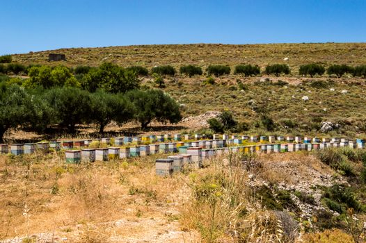 Colorful wooden beehives among olive trees