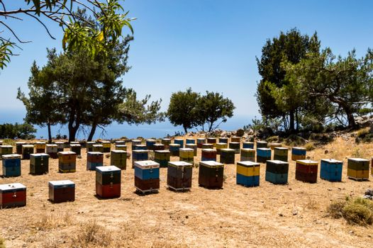 Colorful wooden beehives among the trees facing