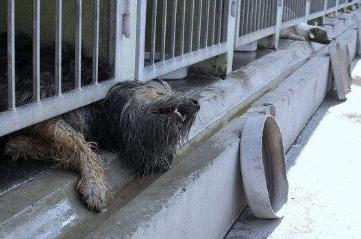 A closed dog is trying to get rid of the bone-yard.
