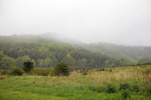 View of old Christmas tree farm on a misty day. Now part of Elk Knob State Park.