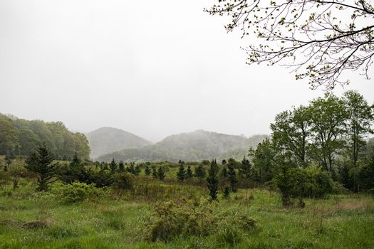 Misty view of old Papa Noel Chirstmas tree farm, now part of Elk Knob State Park.