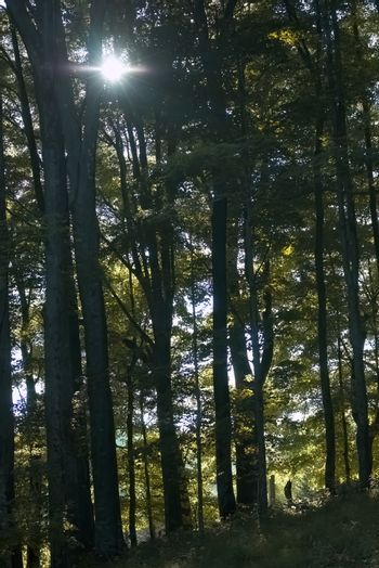Evening sunlight filters through the forest canopy at Elk Knob State Park in Ashe County, NC.