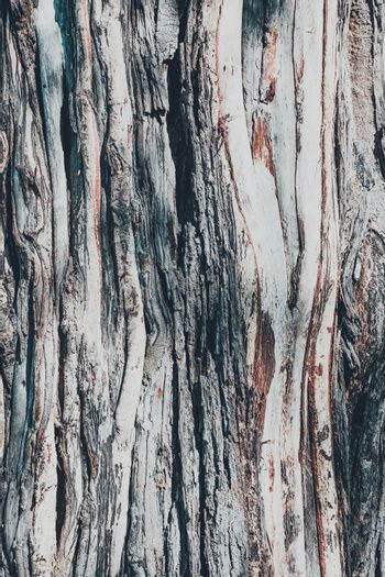 dry tree bark texture and background, nature vintage concept