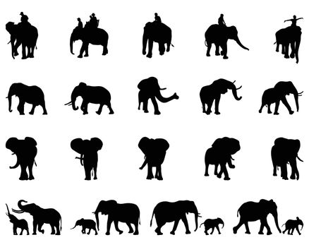 Black silhouettes of elephants on a white background